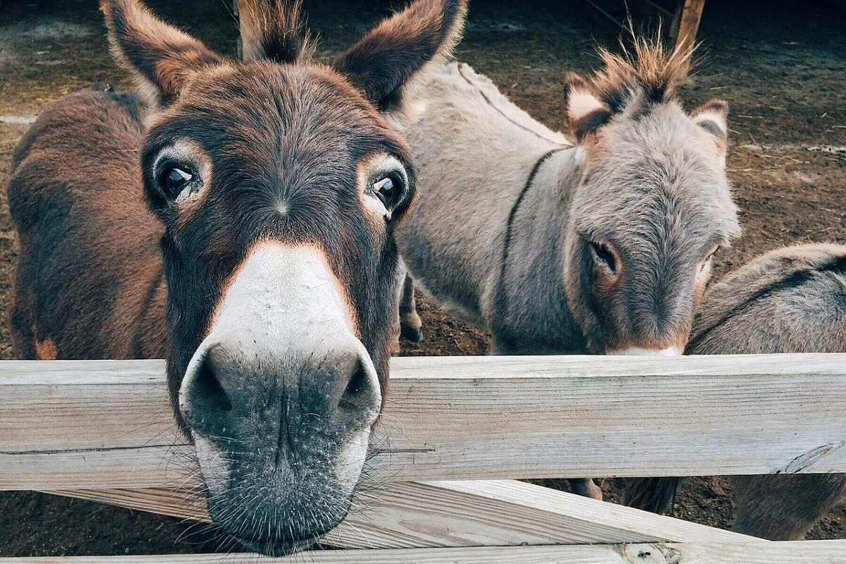 donkeys are sociable animals