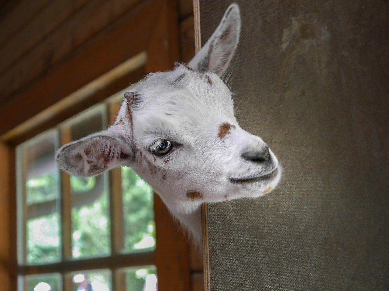 start on your livestock