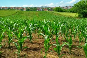 ideal environment for your crops