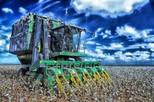how is cotton harvested