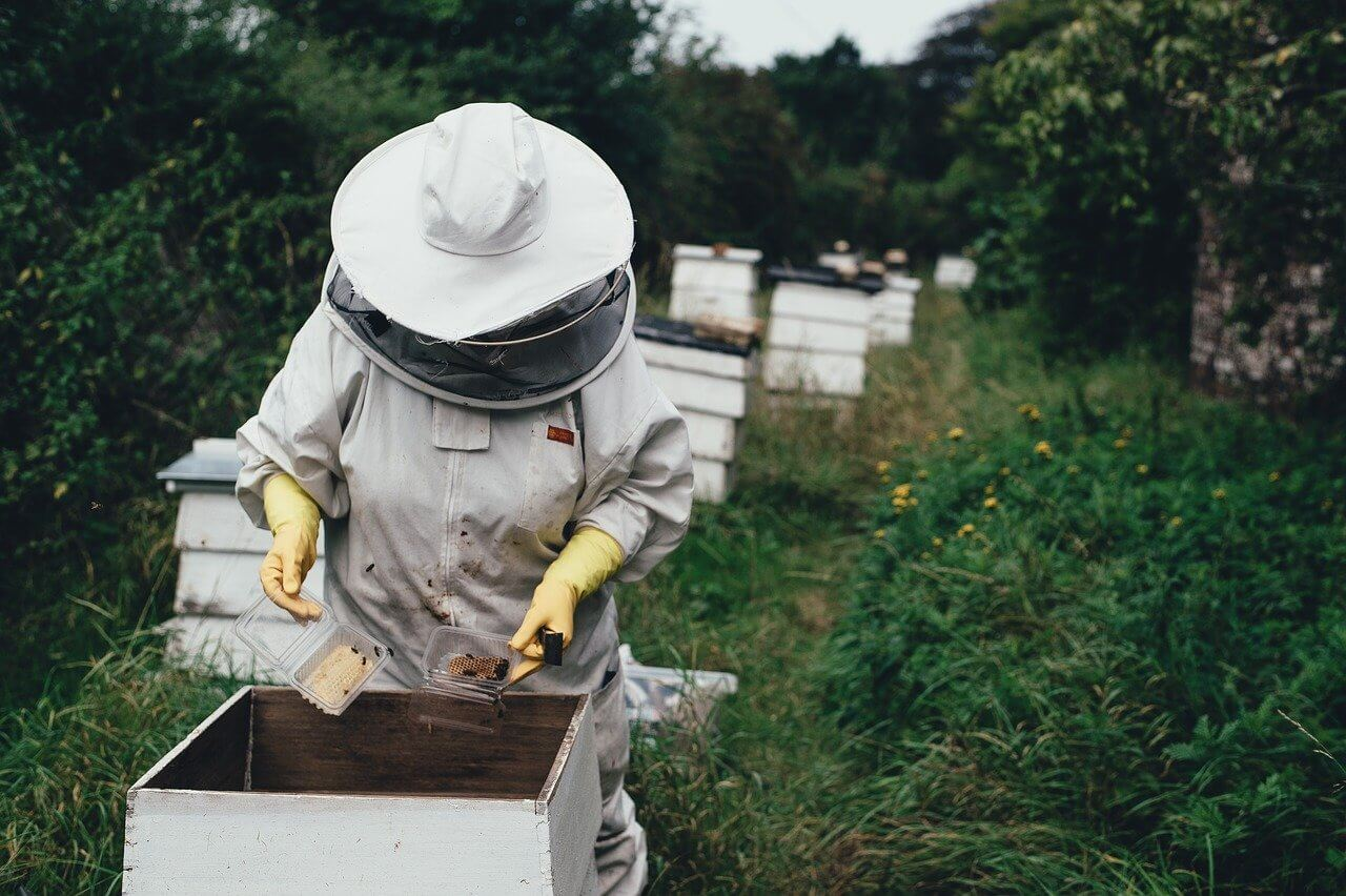 beekeeping is a thoughtful process