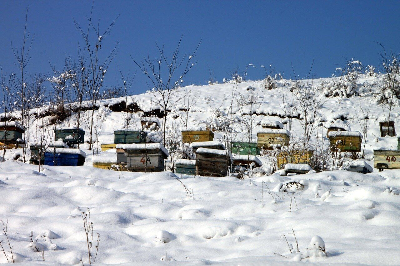 what to feed bees in winter