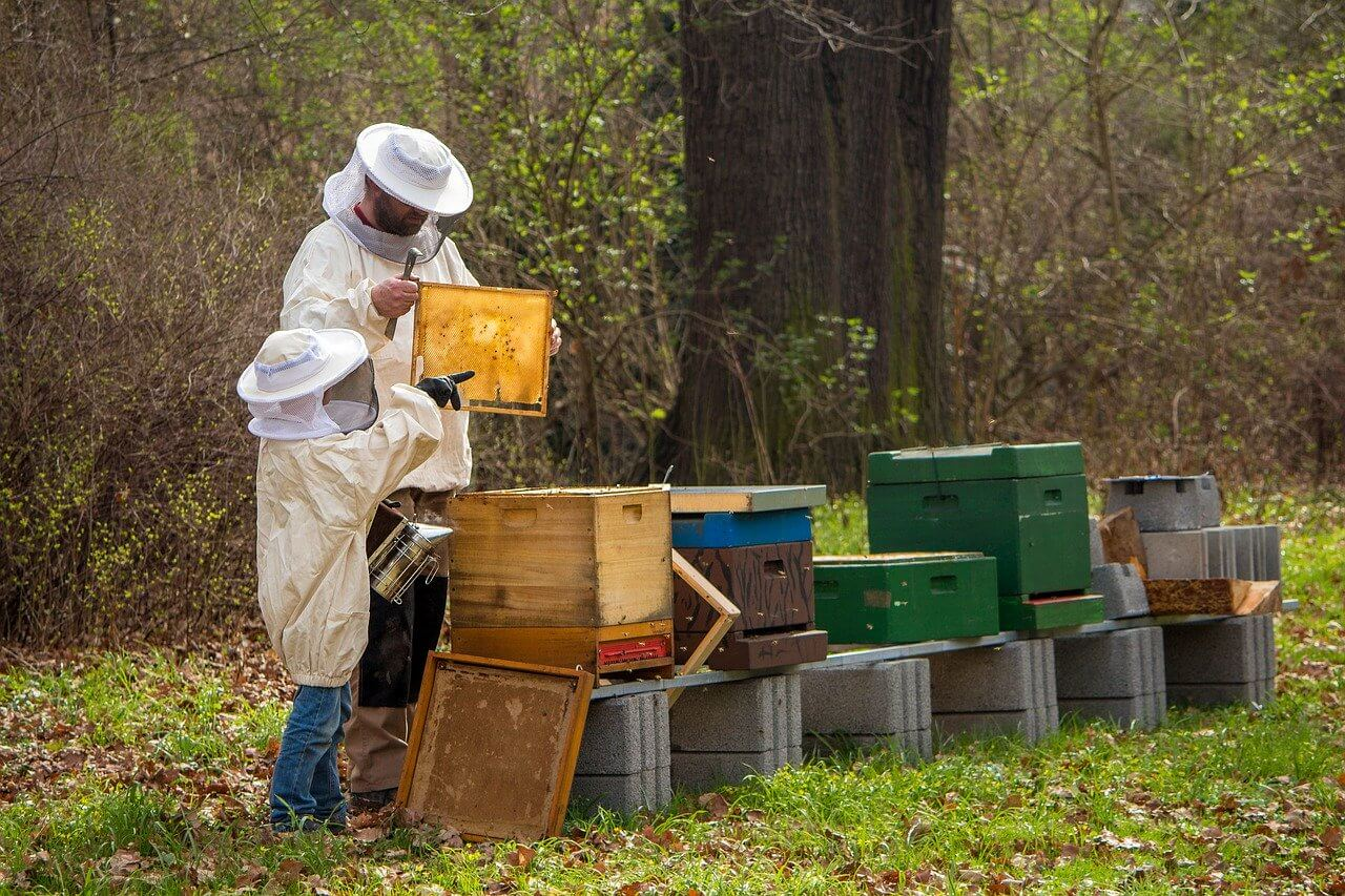 what should you feed bees in the wintertime