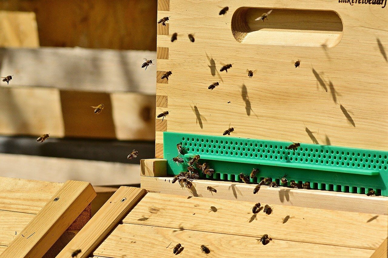 good hive management