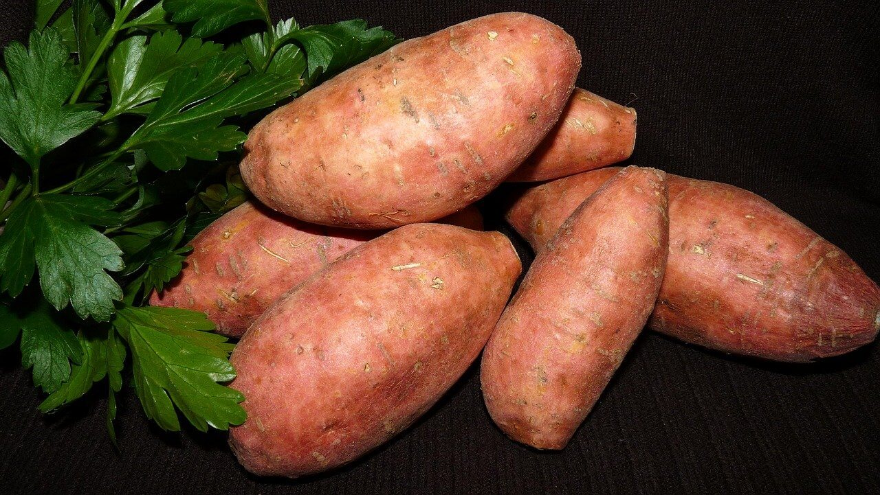 what not to grow with your sweet potatoes