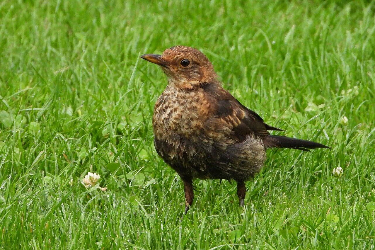 bird issues in the garden