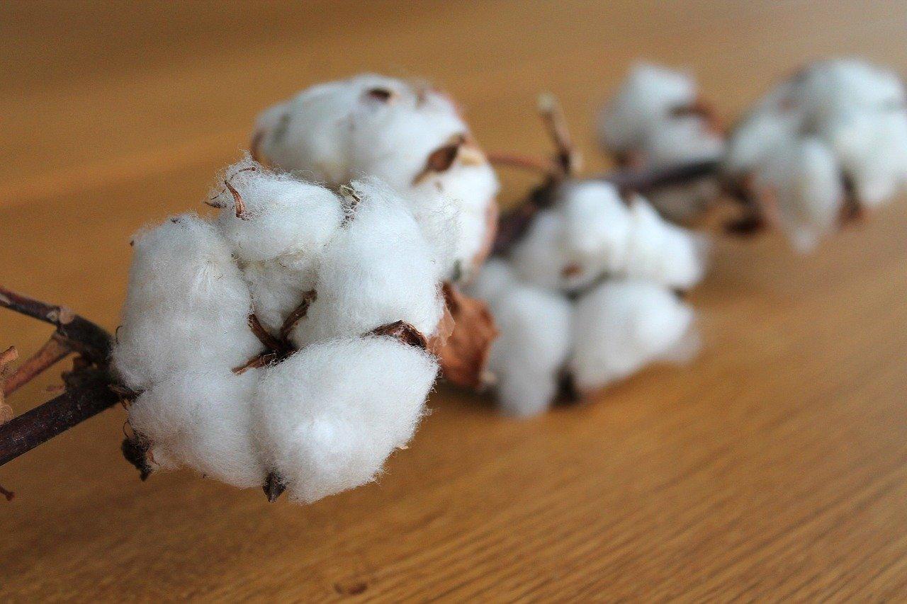 how to preserve cotton stalks