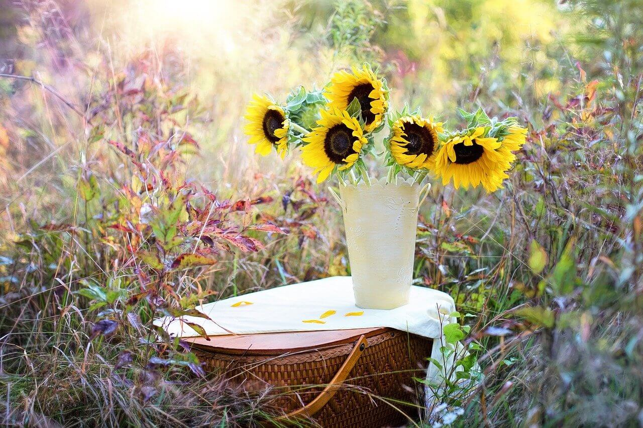 best sunflowers to grow in pots