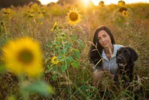 are sunflowers poisonous to dogs