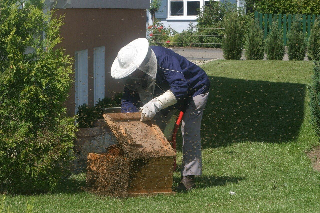how to calm bees without smoke
