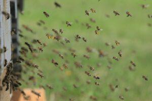 why keep bees calm