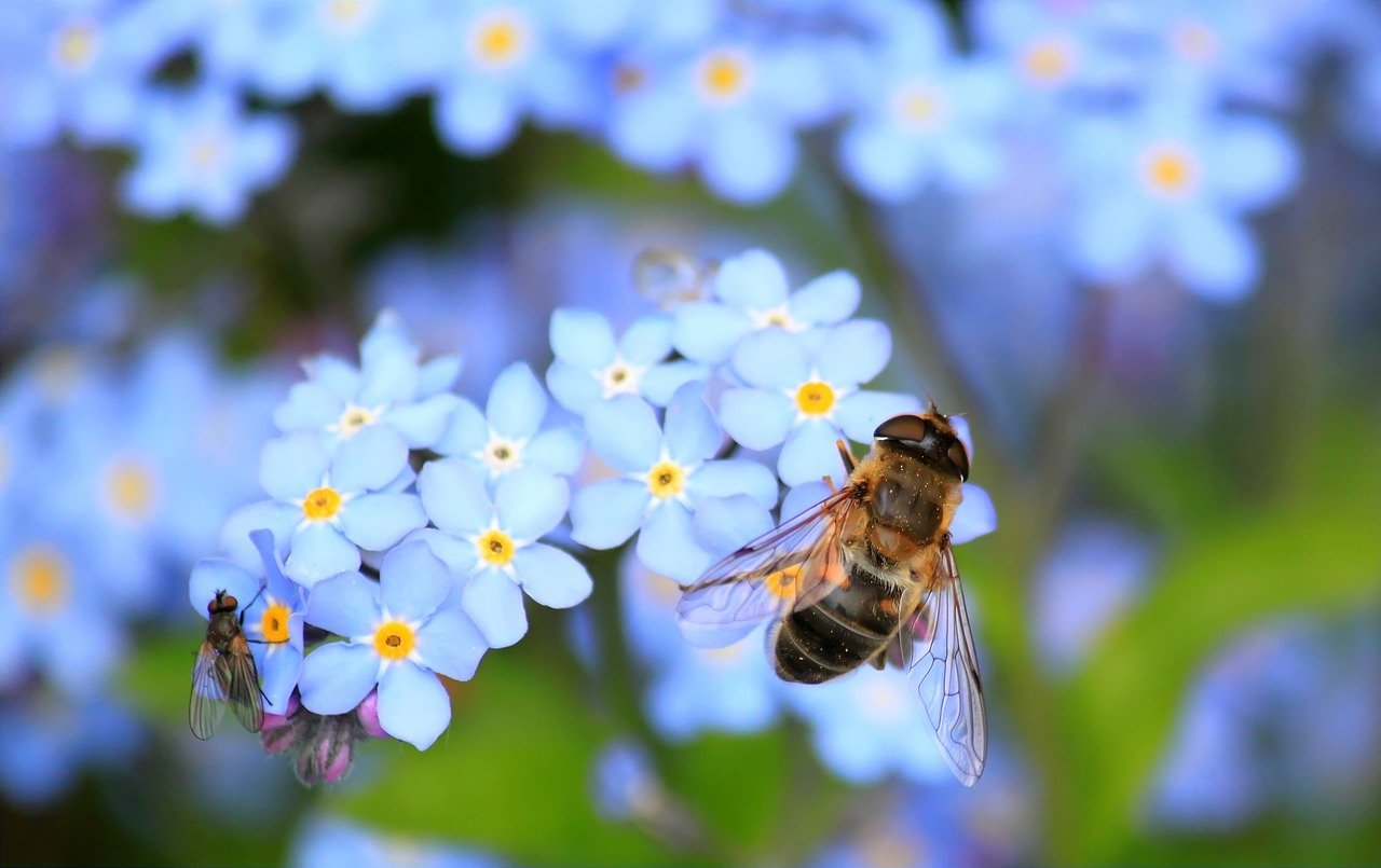 top perennials & annuals for bees