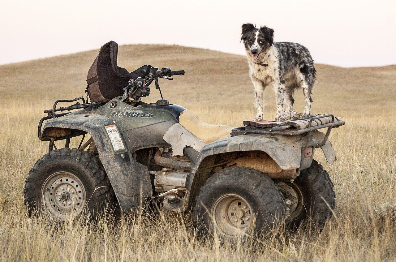 should you buy a used atv