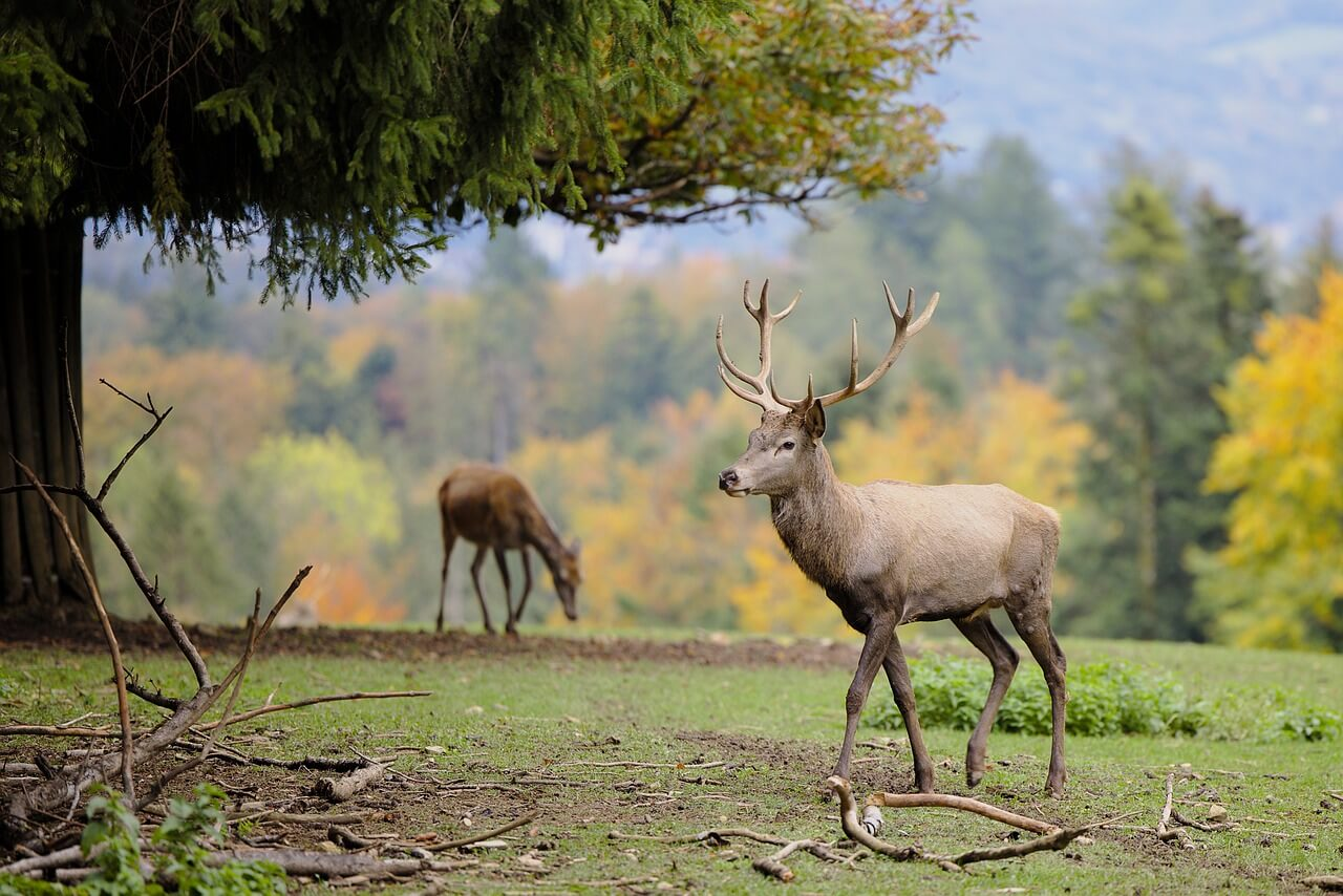 should you plant soybeans for deer