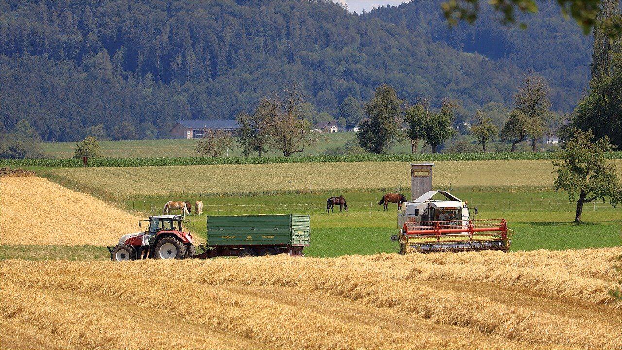 how do you store barley long term