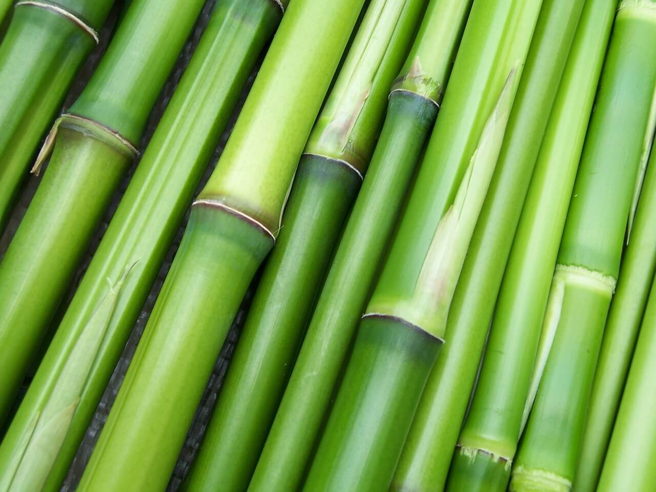how hard is it to start a bamboo farm