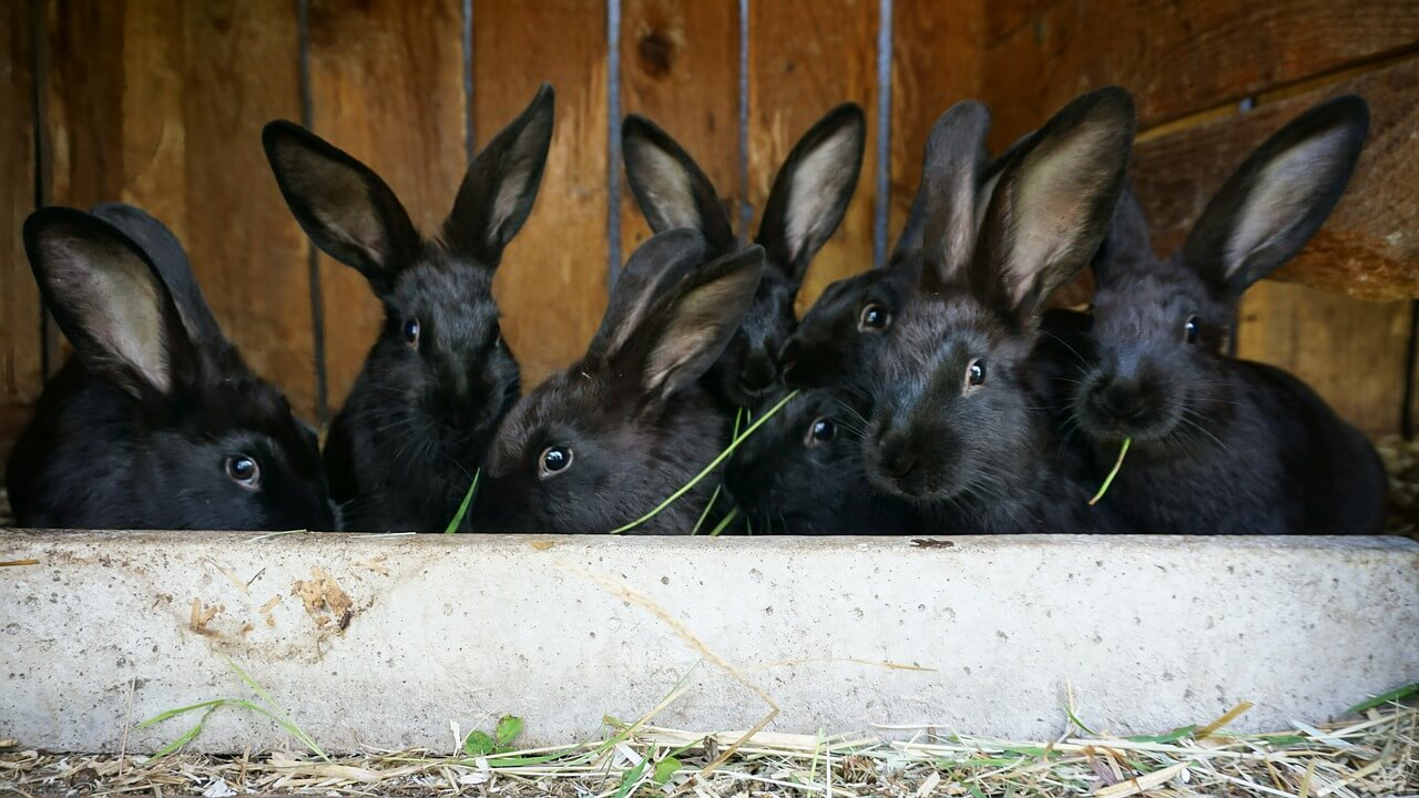 What is the Difference Between Farmed and Wild Rabbit